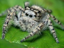 Факты о пауках