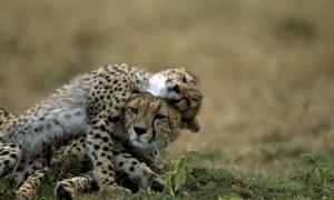 Семейные отношения у животных